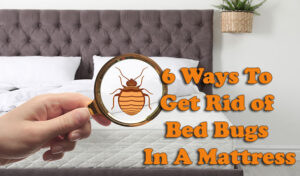 6 Ways To Get Rid of Bed Bugs In A Mattress